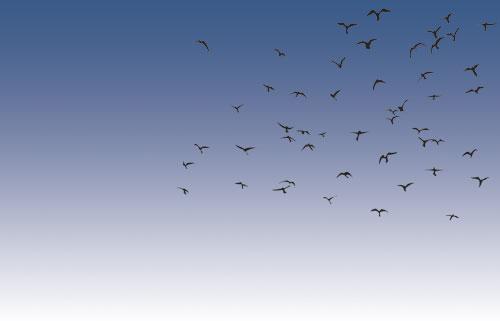 school_news_birds_1