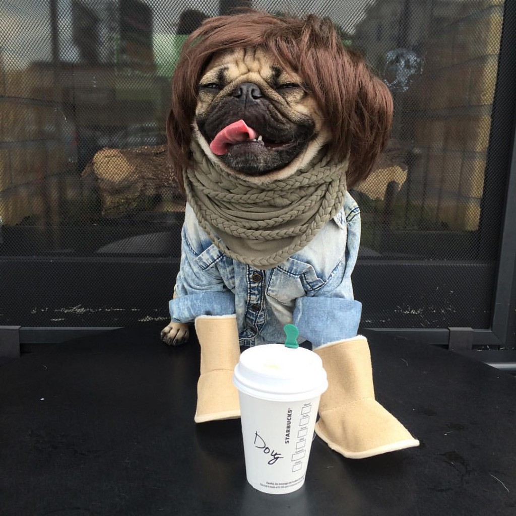 Dough the Pug is Ready for Fall