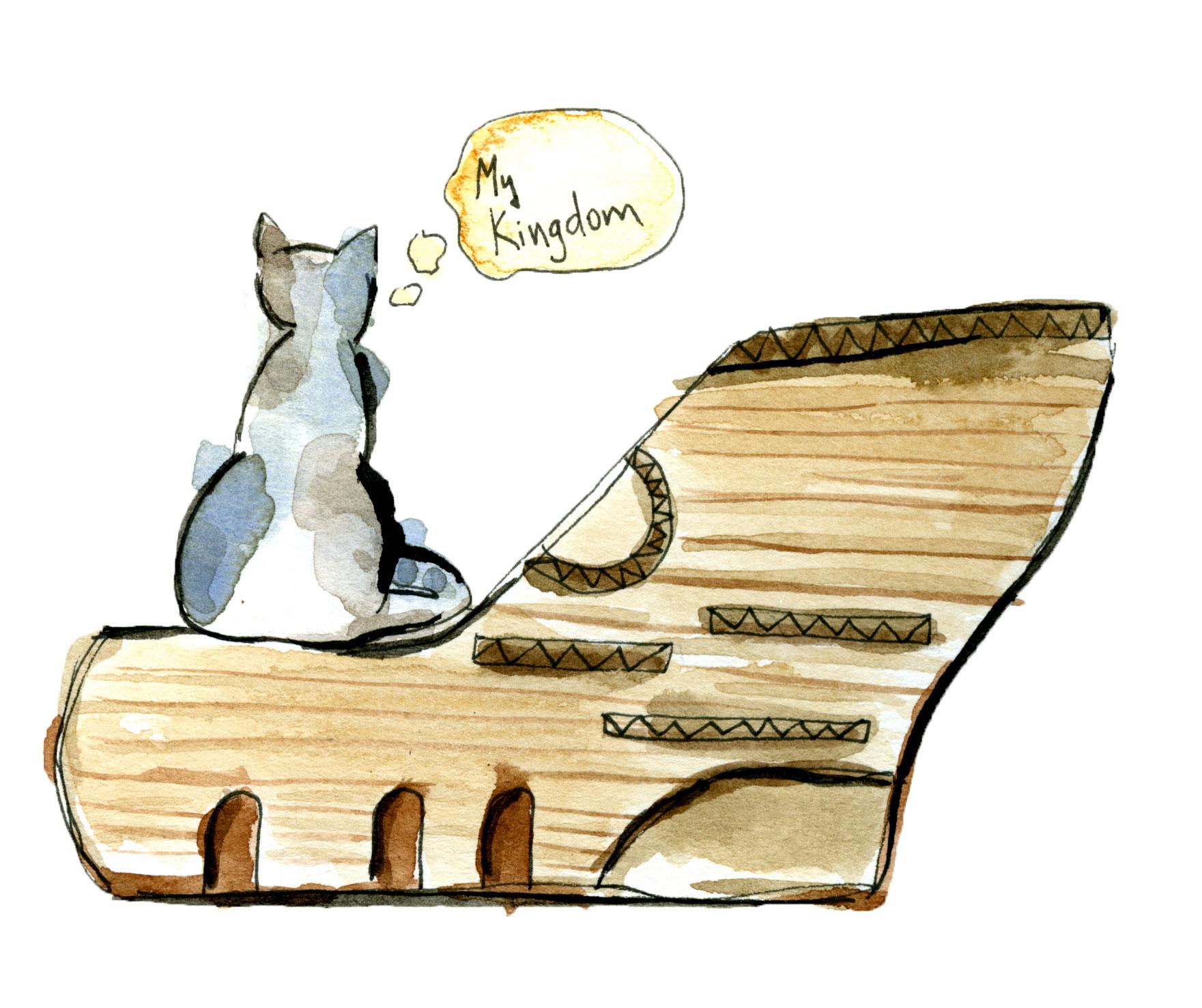 cat-pres-9